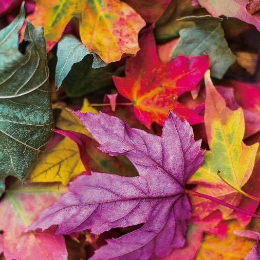 秋のおすすめ ブレンドレシピ